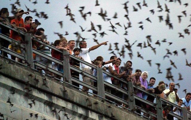 Bat Crazy in Austin Texas