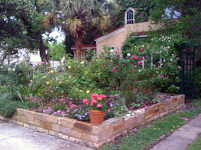 rose beds on Laurel Lane Austin Texas