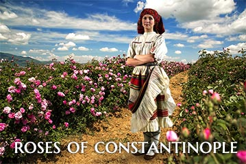 Roses of Constantinople