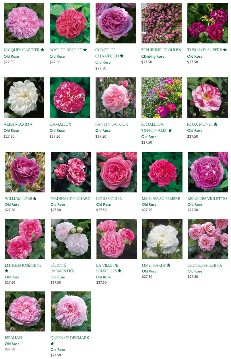 old roses available from David Austin