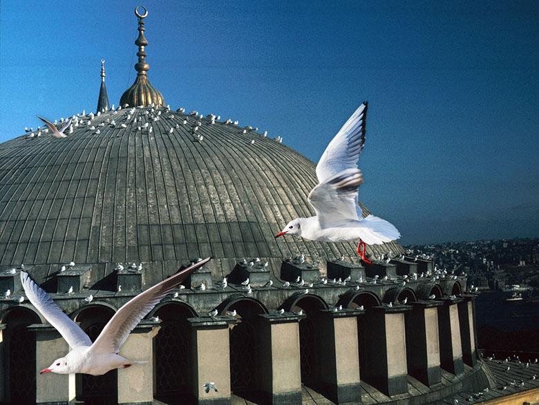 Hagia Sophia seagulls
