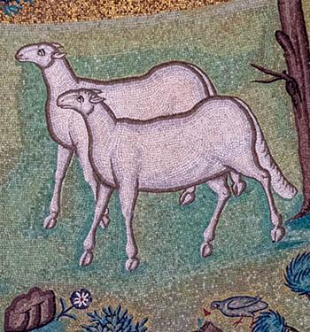 sheep in Ravenna