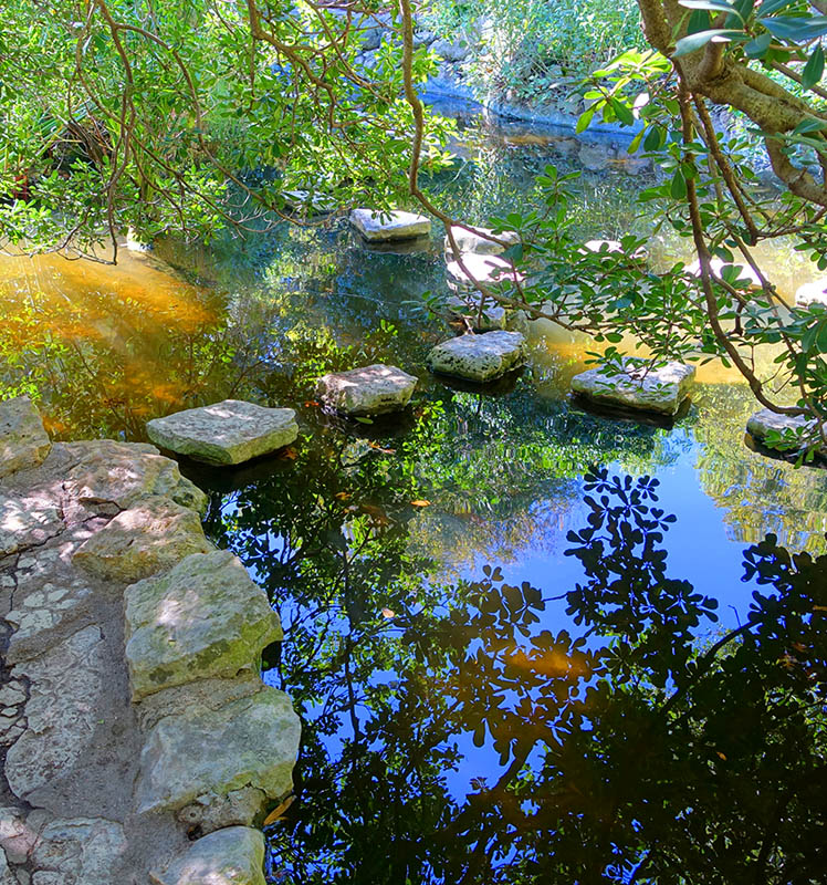 Koi Pond in Austin