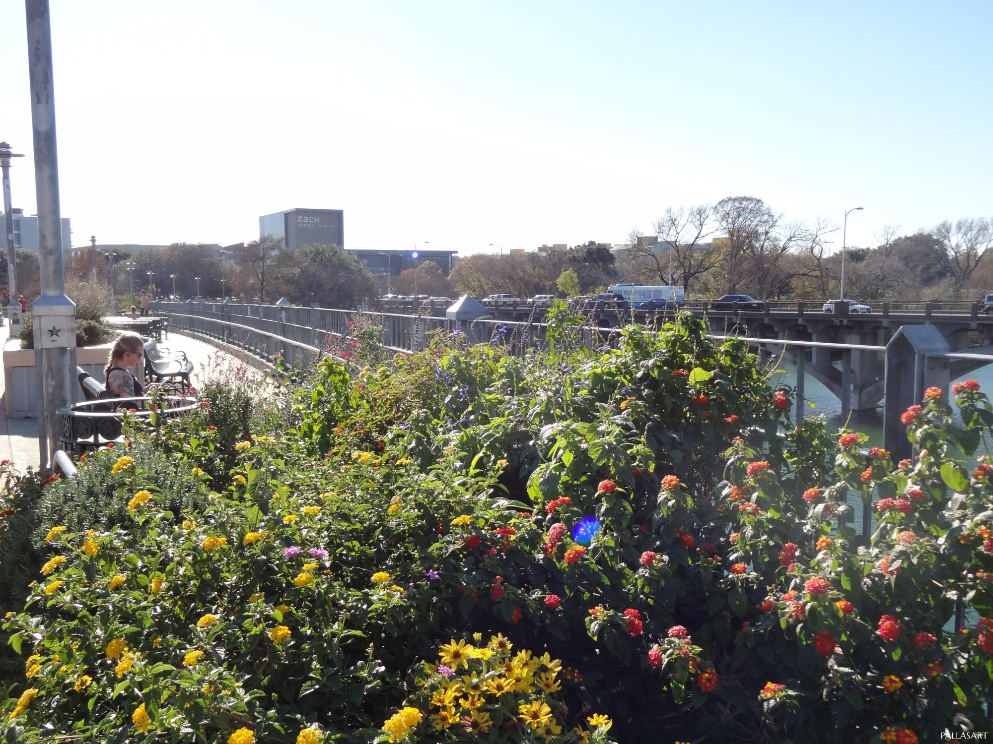 Flowers on Lamar Pedestrian Bridge in Austin, TX