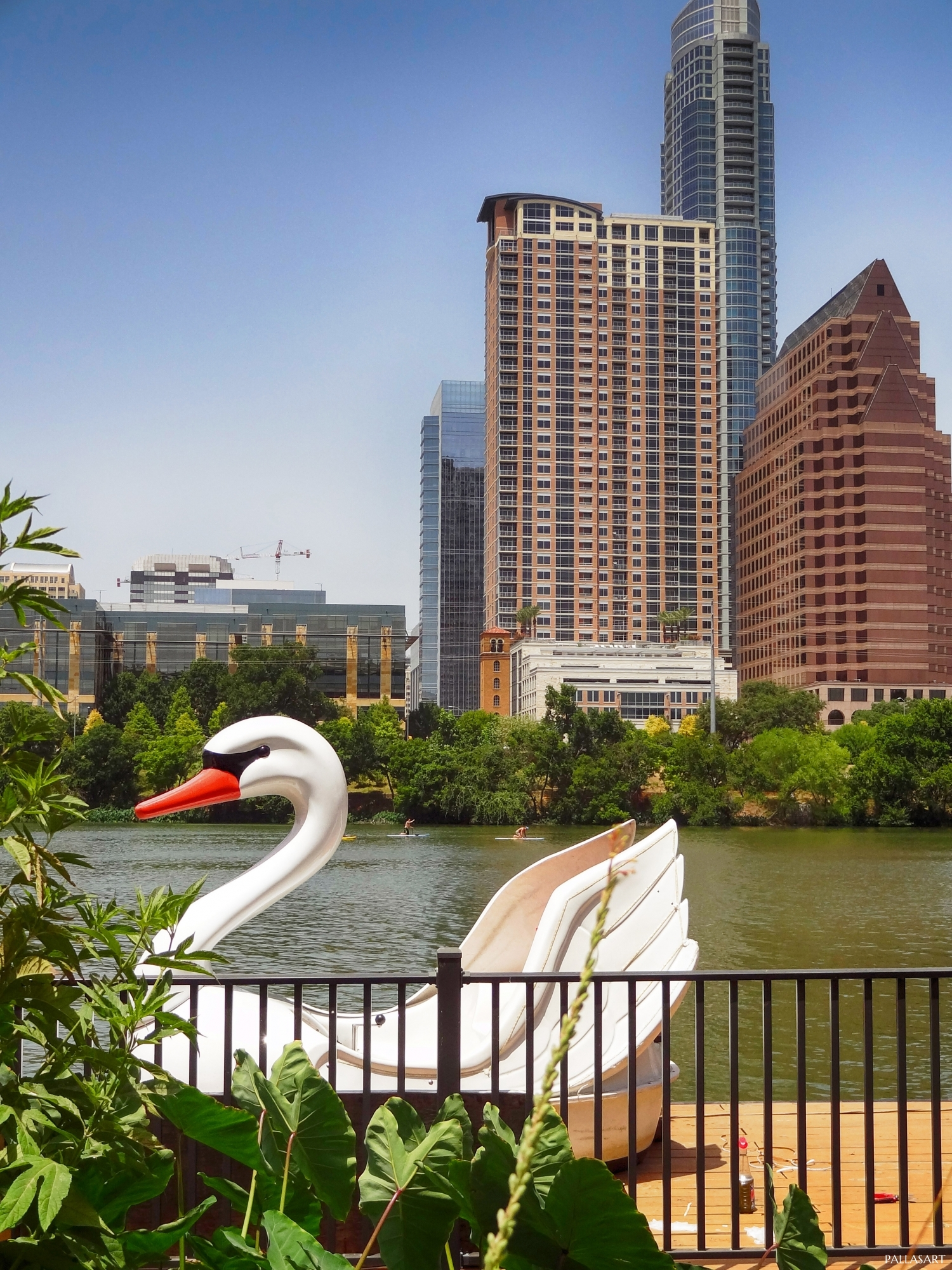 Swan Boat In Downtown Austin, Texas