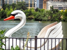 Swan Boat Rental on Town Lake