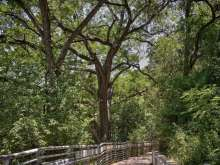 Hike and Bike Trail Near Barton Springs