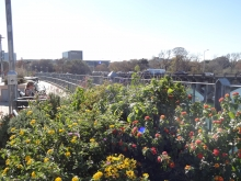 Austin Trail Foundation Plants Flowers on Lamar Pedestrian Bridge